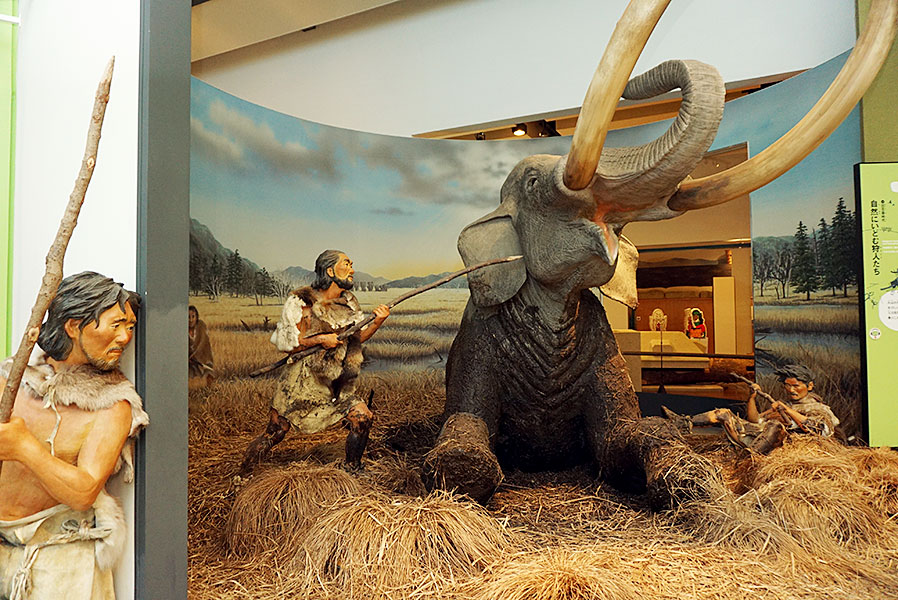 ナウマンゾウと「氷上回廊」 ダイナミックな旧石器時代の物語 | 丹波新聞